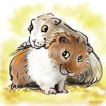 colour animal portraits to buy sheila graber guinea pig pals