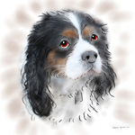 colour animal portraits to buy sheila graber king charles spaniel