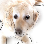 colour animal portraits to buy sheila graber golden retriever