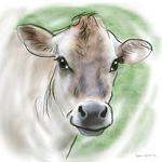 colour animal portraits to buy sheila graber cow