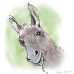 colour animal portraits to buy sheila graber donkey