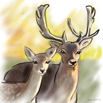 colour animal portraits to buy sheila graber fallow deer