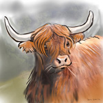 colour animal portraits to buy sheila graber highland cattle
