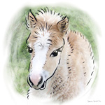 colour animal portraits to buy sheila graber fallabella foal