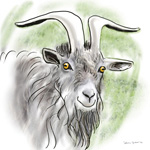 colour animal portraits to buy sheila graber goat